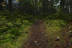小道路在青苔森林里 库存图片