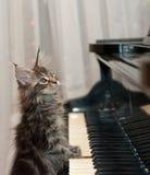 小钢琴演奏家 免版税库存图片