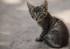 小镶边灰色小猫坐在背后照明的一个晴天 免版税库存图片