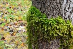 小阳春 在树干的一个青苔 免版税库存照片