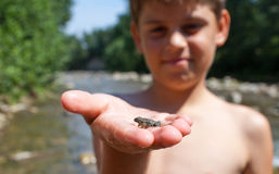 小青蛙在儿童的手上 免版税库存图片