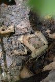 小青蛙的图象在地面上的 被截肢者 图库摄影
