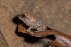 小青蛙 免版税库存照片