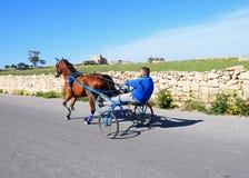 小马和陷井的,马耳他人 库存图片