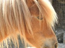 小马的画象 库存照片