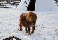 小马 免版税图库摄影