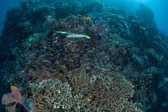 小鱼和珊瑚礁 免版税图库摄影