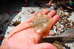 小鱼品种 库存照片