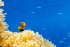 小鱼在海洋 免版税库存照片