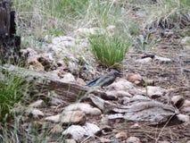 小鸟在森林里 图库摄影
