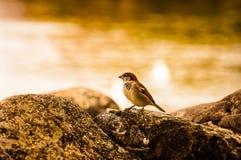 小鸟寻找 免版税库存照片