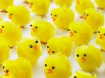 小鸡充分复活节框架 免版税库存图片