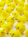 小鸡充分复活节框架 库存照片