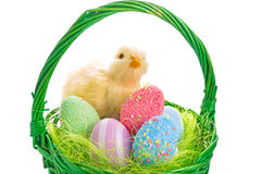 小鸡和复活节篮子用鸡蛋 免版税库存图片