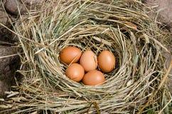 小鸡在室外干草的巢怂恿  库存照片