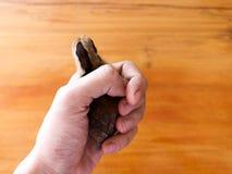 小鸡在手中在木背景 免版税库存图片