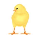 小鸡复活节例证查出的黄色 免版税库存照片
