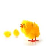 小鸡复活节 库存图片