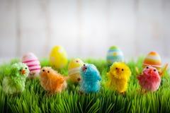 小鸡复活节草查出的白色 免版税库存照片