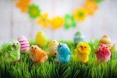 小鸡复活节草查出的白色 图库摄影