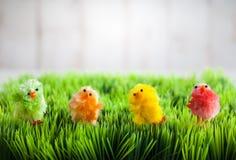 小鸡复活节草查出的白色 免版税库存图片