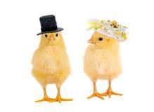 小鸡婚礼 免版税库存图片