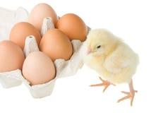 小鸡容器在突出附近怂恿 免版税库存照片