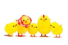 小鸡系列 库存图片