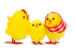 小鸡系列 免版税图库摄影