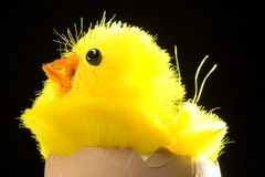 小鸡复活节彩蛋黄色