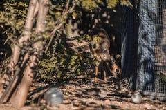 小鹿在动物园里在莫斯科 库存图片