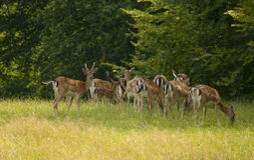 小鹿牧群 库存图片
