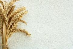 小麦面粉和麦子钉 库存图片