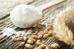 小麦面粉 免版税库存图片