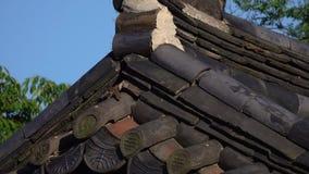 小麻雀鸟离开它的在古老传统韩国铺磁砖的屋顶凹陷的巢  动物在都市生活中 股票录像
