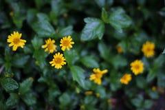 小黄色花在公园 免版税库存图片