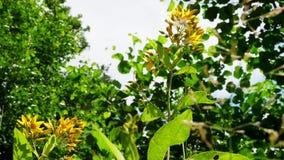 小黄色花特写镜头在春天森林 股票视频