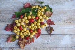 小黄色苹果、草莓、莓和美丽的多彩多姿的叶子秋天背景在蓝色木背景 免版税图库摄影