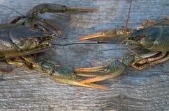 小龙虾二 图库摄影