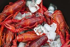 小龙虾和冰 库存照片