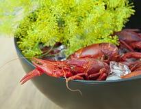 小龙虾和莳萝 免版税图库摄影