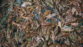 小龙虾在鱼市上 影视素材