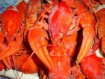小龙虾煮沸了大,红色在桌上 免版税库存图片
