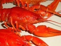 小龙虾煮沸了大,红色在桌上 图库摄影