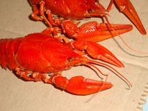 小龙虾煮沸了大,红色在桌上 库存图片
