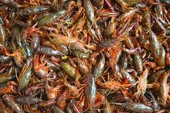 小龙虾煮沸 库存照片