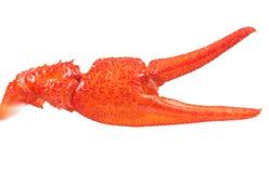 小龙虾爪 库存图片