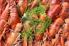 小龙虾莳萝 免版税库存图片