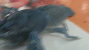 小龙虾蓝色 股票视频