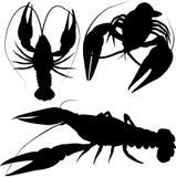 小龙虾,在白色隔绝的小龙虾剪影 库存图片